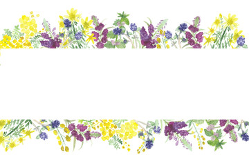 Watercolor pattern of useful field plants and flowers. Bright flowers and green leaves Wall mural