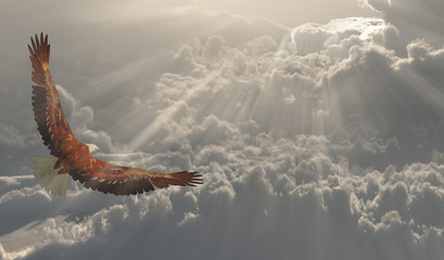 Eagle in flight about the clouds Wall mural