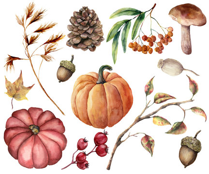 Watercolor autumn plants set. Hand painted pumpkins, leaves, mushroom, rowan, apple, cone, acorn isolated on white background. Floral illustration for design, print or background.