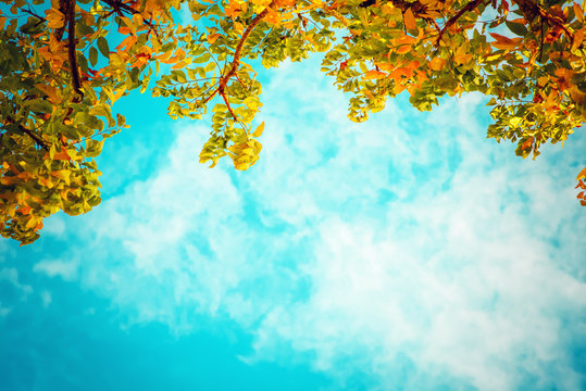 vintage photo of autumn tree with blue sky. nature background of fall season. vintage colour tone.