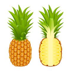 Vector illustration of pineapple whole and half isolated on white background. Tropical fruit.