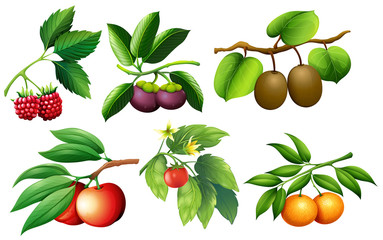 A set of fruit and branch