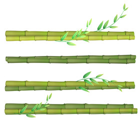 A set of bamboo on white background