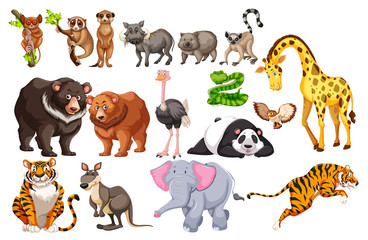 A Set of Wild Animals on White Background
