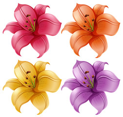 A set of lily flowers