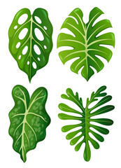 A set of tropical leaves