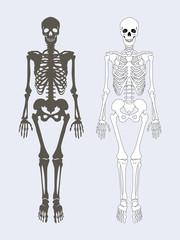 Skeleton of Human Body Set Vector Illustration