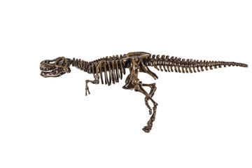 skeleton of a dinosaur on a isolated background