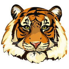 Head of beautiful tiger. Detailed vector draw of animal. Tiger face close-up.