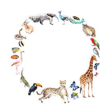 Animals - zoo, wildlife - antelope, owl, gecko, parrot, other . Wreath frame for Animal Day. Watercolor