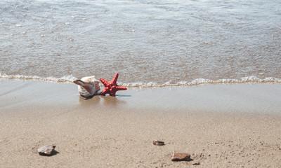 Big sea shell and starfish on beach sand
