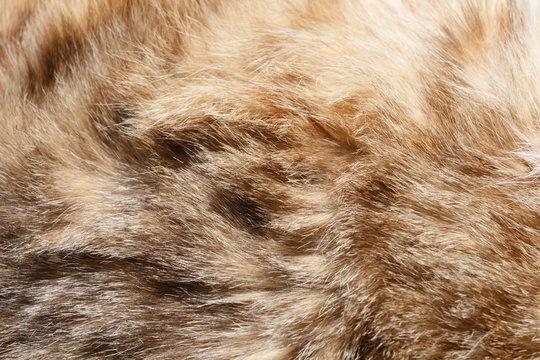 Gros plan sur la fourrure d'un chat tigré