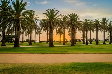 Sunset at St Kilda beach with palm trees in the foreground