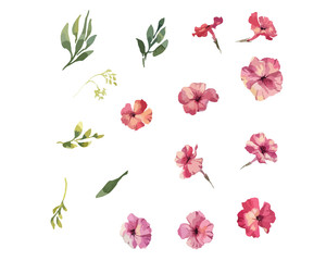 Phlox flowers hand drawn watercolor colleclion