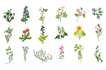 Wild Flowers Hand Drawn Set Of Detailed Illustrations