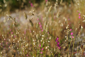 The blooming meadow. Defocused background image.
