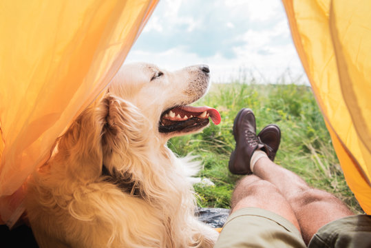 partial view of tourist in tent with golden retriever dog on meadow