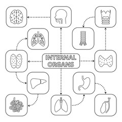 Internal organs mind map with linear icons