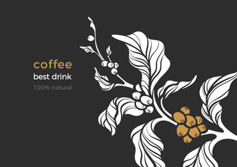 Nature vector banner of coffee branch, leaves, bean.