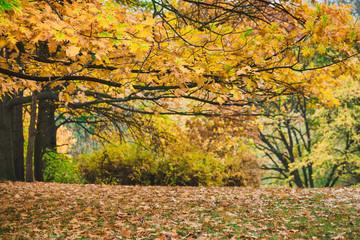 Idillic autumn landscape of park, lawn, yellow trees