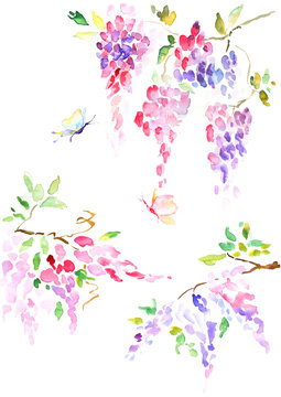 Watercolor wisteria in purple and pink colors with butterflies, colorful illustration of spring blooming flower