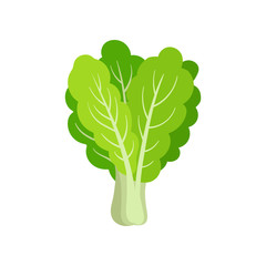 Flat vector icon of fresh collard. Leafy green vegetable. Healthy ingredient for vegetarian salad. Organic food