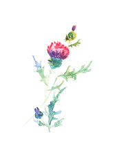 Purple thistle colorful art, watercolor single violet wildflower illustration, isolated bright flower