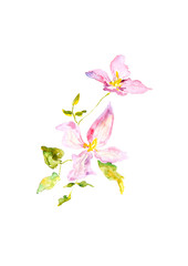 Two watercolor pink flowers art, isolated floral drawing, spring blooming flowers