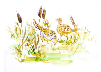 Two quails in spring grass drawing, Adorable birds art, Cute Watercolor Easter illustration