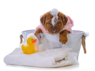 puppy getting a bath