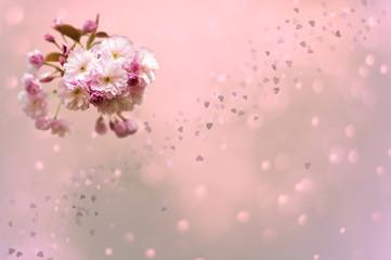 Kirschblüten isoliert vor rosa Hintergrund. Kleine Herzen und Bokeh im Hintergrund. Mit Textfreiraum