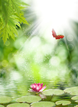 lotus flower and butterfly above the water