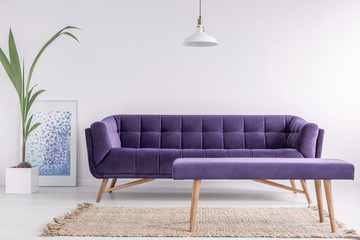 Bright living room interior with fresh plant, poster and carpet on the floor and purple couch and bench in real photo with empty walls