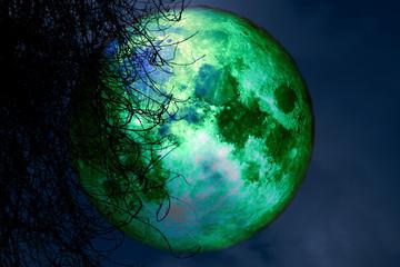 full beaver moon back silhouette dry tree in night sky