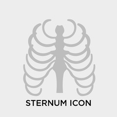 Sternum icon vector sign and symbol isolated on white background, Sternum logo concept