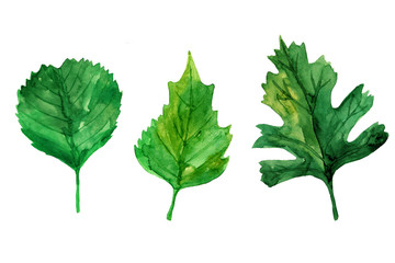 Hand drawn collection of different tipes of leaves isolated on white background. Watercolor colorful illustration in different shades of green. Set of botanical elements.