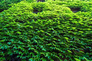 Zielone kwiaty i rośliny.