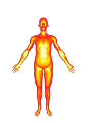 3d illustration of human skin body