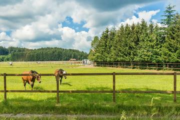 Horses in alpine landscape near Karwendel mountain range and Bavarian alps in Germany