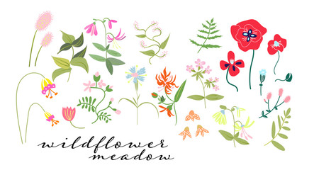 wild flower meadow illustration. floral elements. romantic hand drawn flowers and leaves collection.