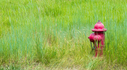 solitary bright red fire hydrant abandoned in a field of lush green wild grasses with copy space
