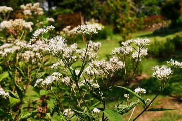 久住高原の花