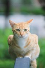 homeless cat at hong kong out door park