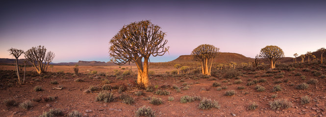 Stores à enrouleur Rose clair / pale Wide angle landscape photo of the sunset over the Quiver tree forest in Nieuwoudtville in the Northern Cape of South Africa