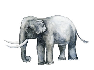 watercolor  elephant  hand drawn  isolated white background.