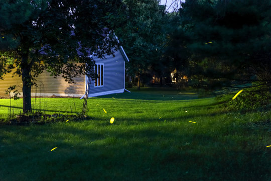 Fireflies flying in a backyard outdoors,  long expsure timelapse
