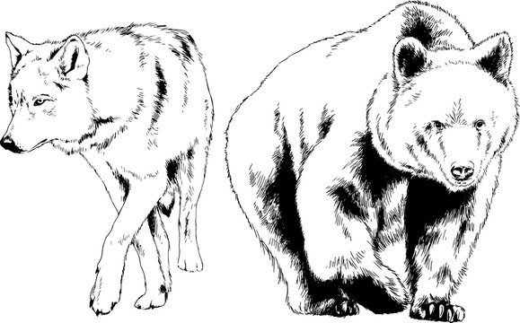 set of vector drawings on the theme of predators are drawn by hand with ink