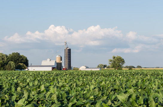 Soybeans growing in a field with a small, family farm in the background. Barn, silo, crib, and out buildings of a farm, with clouds gathering overhead. Concepts of agriculture, farming, trade war