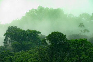 Jungle. Danum Valley, Borneo, Indonesia. 20 september 2014