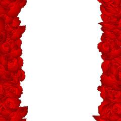Dianthus caryophyllus - Red Carnation Flower Border.